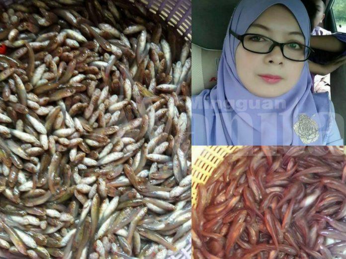 Anak Ikan Haruan Goreng Kunyit, Resepi RARE Dari Sawah