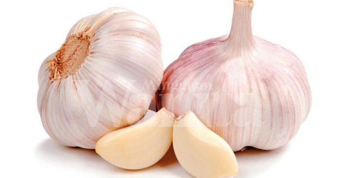 Allicin Dalam Bawang Putih Baik Untuk Kesihatan