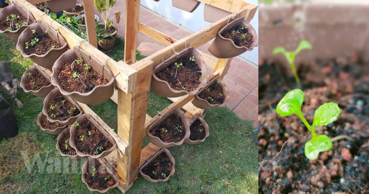 DIY Pasu Gantung Bajet, Tanam Sayur Boleh… Tanam Bunga Pun Cantik!