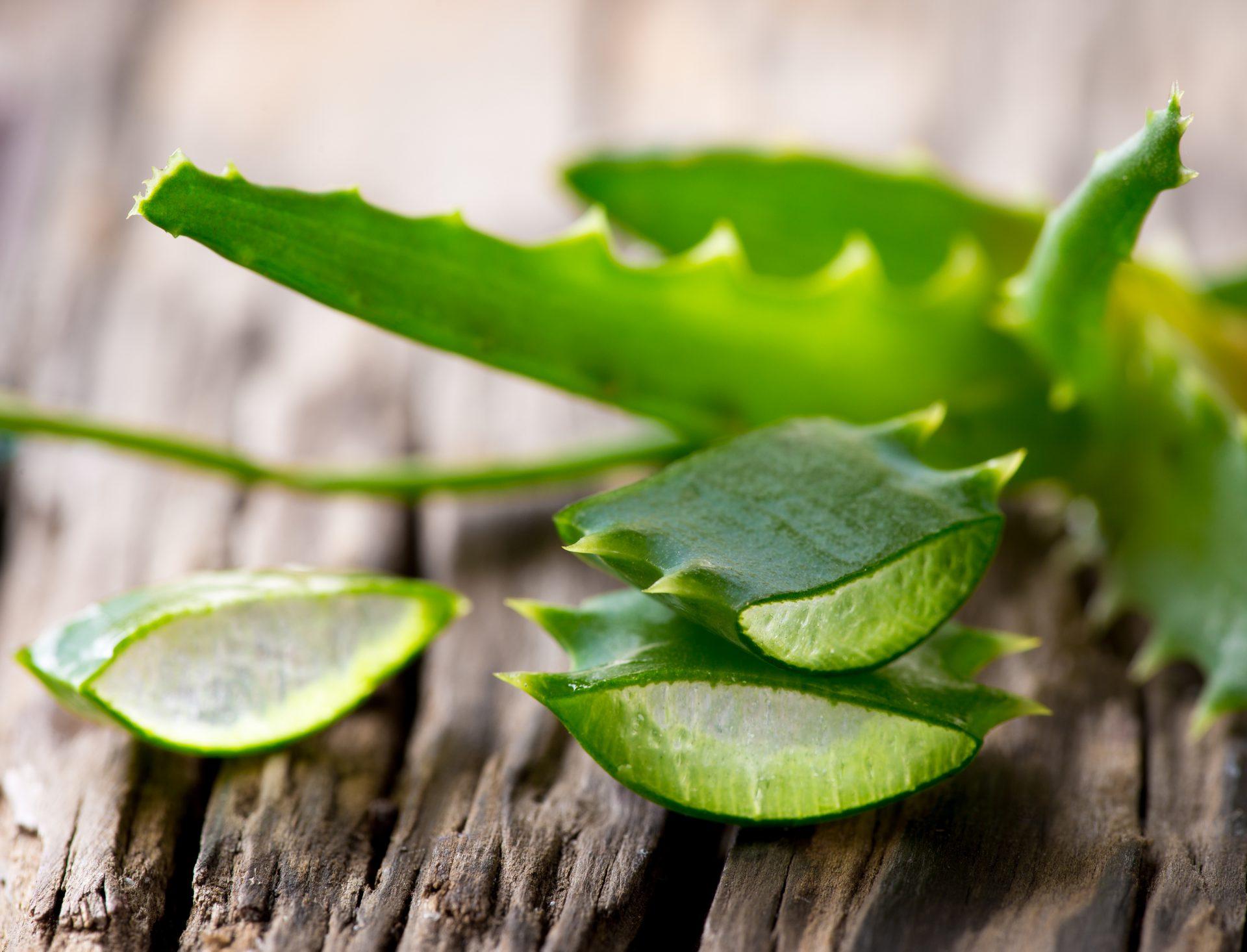 Bulu Mata Lebih Panjang Dan Lentik Dengan Minyak Zaitun, Aloe Vera Dan Telur