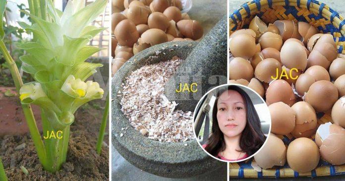 Kulit Telur Jangan Dibuang, Kumpul Jadi Baja Organik Suburkan Pokok