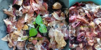 Nak Tanaman Subur, Serangga Menjauh Diri, Tabur Kulit Bawang Jadi Baja!