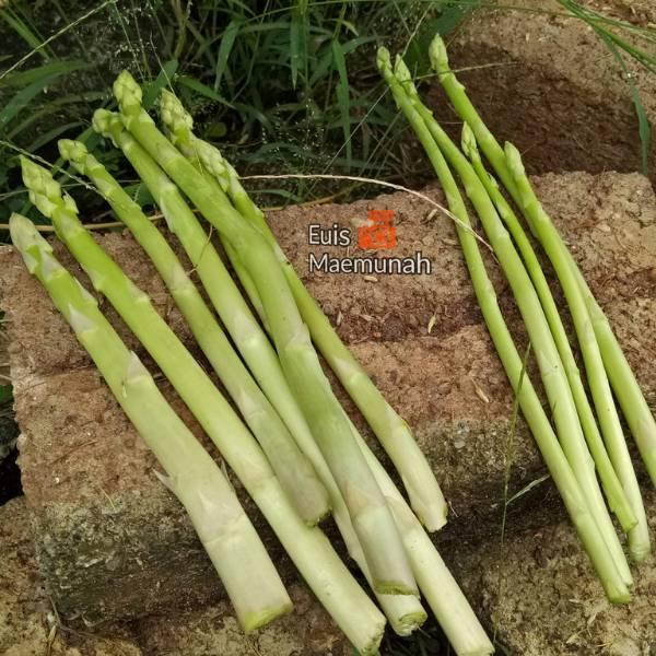 Tanam Sendiri Asparagus Di Rumah, Tuaian Pertama Seawal 10 Bulan